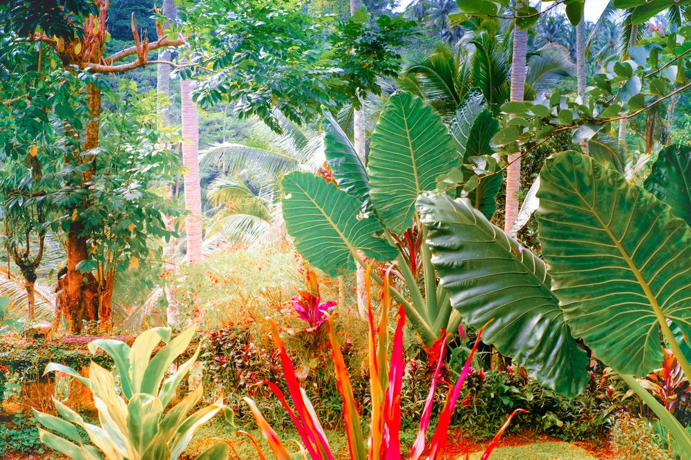 howto make a tropical garden in melbourne